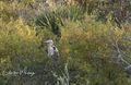 Florida, Myakka River, Sarasota, Great Blue Heron