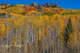 Aspens, Autumn, Colorado, Fall, Kebler Pass
