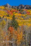 Autumn, Colorado, Kebler Pass, Gunnison County