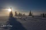 Sunrise, Fog, Pines, Steamboat Springs, Colorado, Silhouette