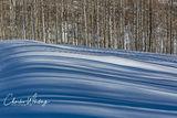 Sun, Shadows, Aspen Grove, Snow, Steamboat Springs, Colorado