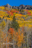 Autumn, Colorado, Kebler Pass, Gunnison County