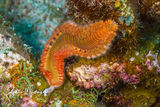 Bristle Worm, Belize, Lighthouse Reef, coral reef