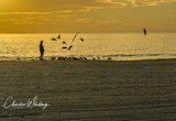 Siesta Key, Sarasota, Florida, Gulls, Twilight, Sunset