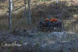 Autumn, Pumpkins, Big Bear Creek Ranch, Placerville, Colorado