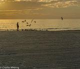 Siesta Key, Sarasota, Florida, Gulls, Twilight, Sunset