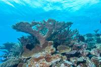 Coral, Bikini Atoll, Marshall Islands