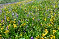 wild flowers, blue larkspur, yellow Aspen Sunflowers