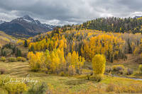 Golden Aspens, Aspens, Telluride, Colorado, San Juan Mountains