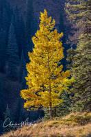 Aspen, Telluride, Colorado
