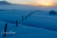 Fenceline, barbed wire, frost, sunrise, Steamboat Springs, Colorado