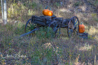 Big Bear Creek Ranch, Autumn Wagon, Placerville, Colorado