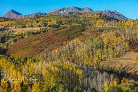 Aspens, Colorado, Dolores Peak, Scrub Oak, Wilson Mesa, Placerville, Colorado