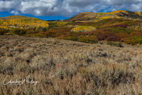 From Owl Creek Pass