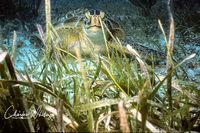Hawks Bill Turtle, Cay Sal Banks, Bahamas