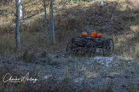 Autumn, Pumpkins, Big Bear Creek Ranch, Placerville, Colorado