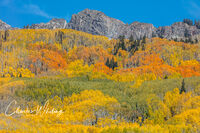 Orange Green and Yellow Aspens
