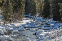 Stream, Snow Fields, Pine Trees, Steamboat Springs, Colorado, Sunlight