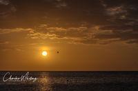 Florida, Sarasota, Siesta Key, Sunset, Pelican