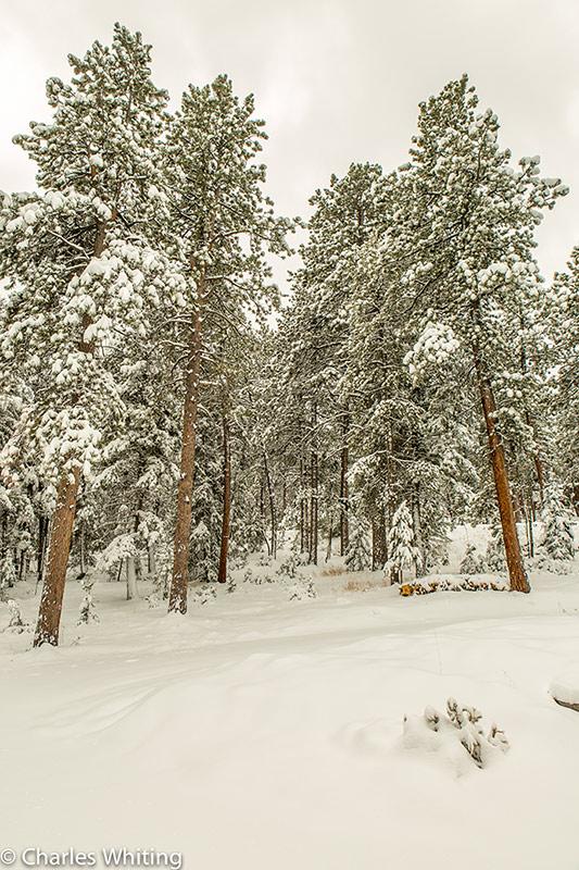 Spring, Rockies, Hillside Haven, Evergreen, Colorado, photo