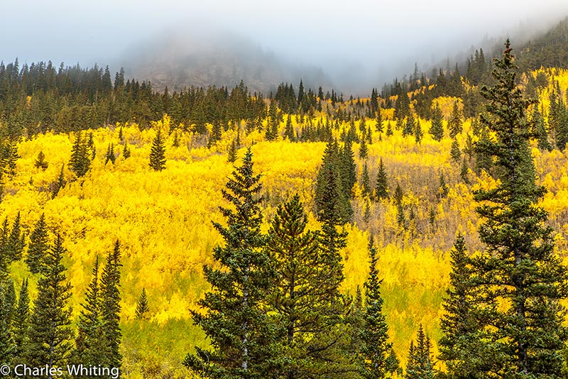 Golden Aspen Trees, Guanella Pass, Squaw Pass, Georgetown Colorado, Evergreen Colorado, Colorado, Fall 2014, Autumn 2014, Fall Foliage, photo