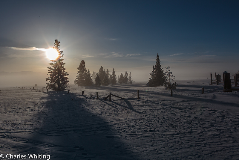 Sunrise, Fog, Pines, Steamboat Springs, Colorado, Silhouette, photo