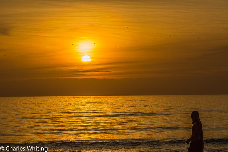 Sunset, Siesta Key Beach, Sarasota, Florida, silhouette, sea birds, photo