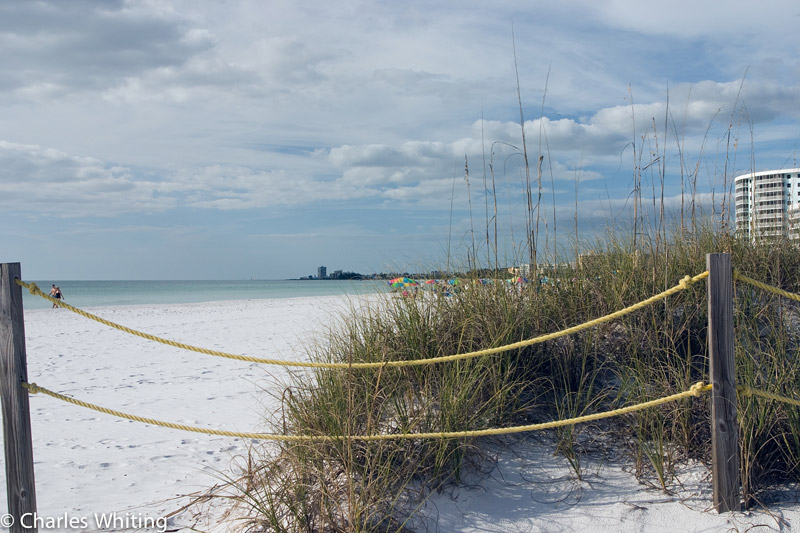 Sea Oats, white sand, Crescent Beach, Siesta Key, Sarasota, Florida, photo