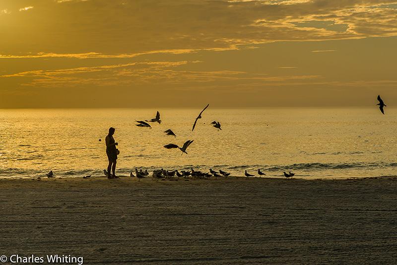 Siesta Key, Sarasota, Florida, Gulls, Twilight, Sunset, photo