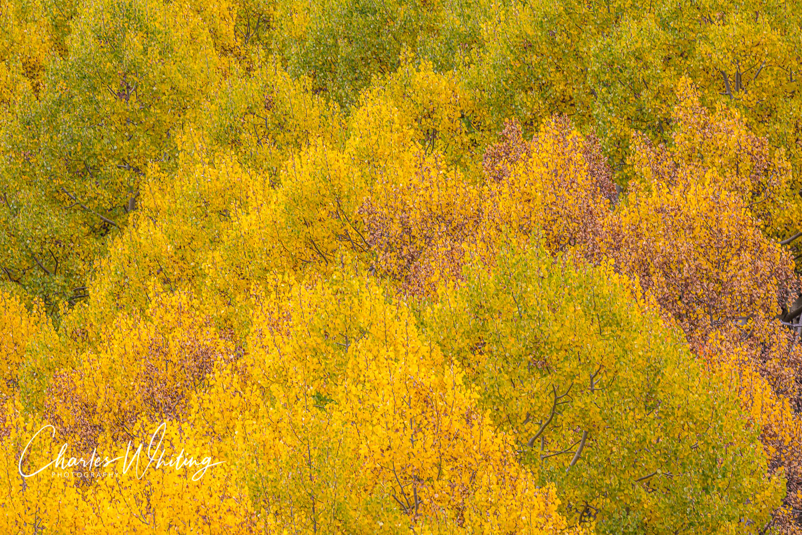 Aspens, Telluride, Colorado, Impressionism, photo