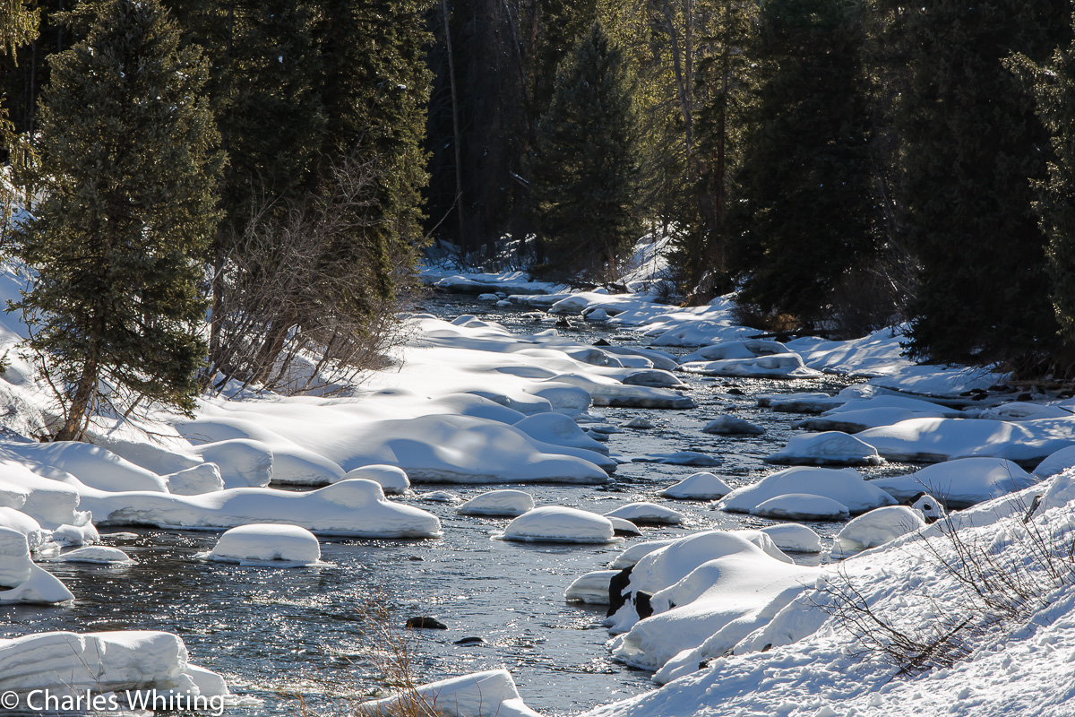 Stream, Snow Fields, Pine Trees, Steamboat Springs, Colorado, Sunlight, photo