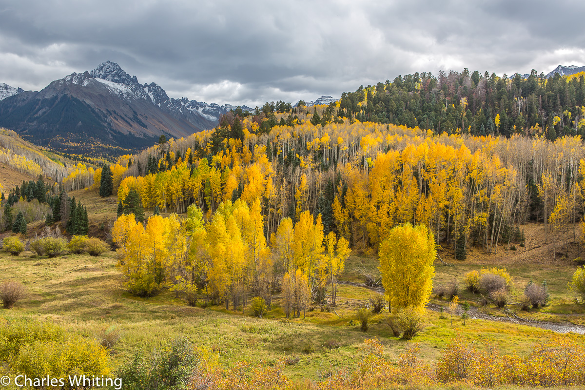 Golden Aspens, Aspens, Telluride, Colorado, San Juan Mountains, photo