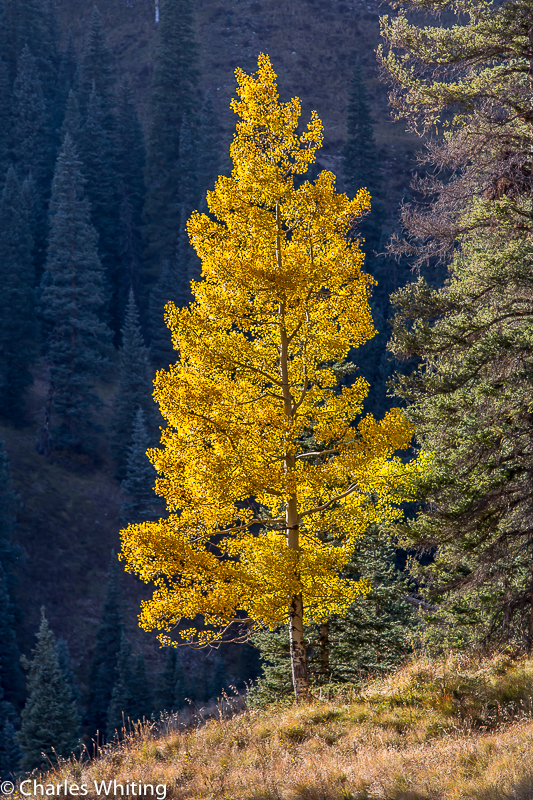 Aspen, Telluride, Colorado, photo