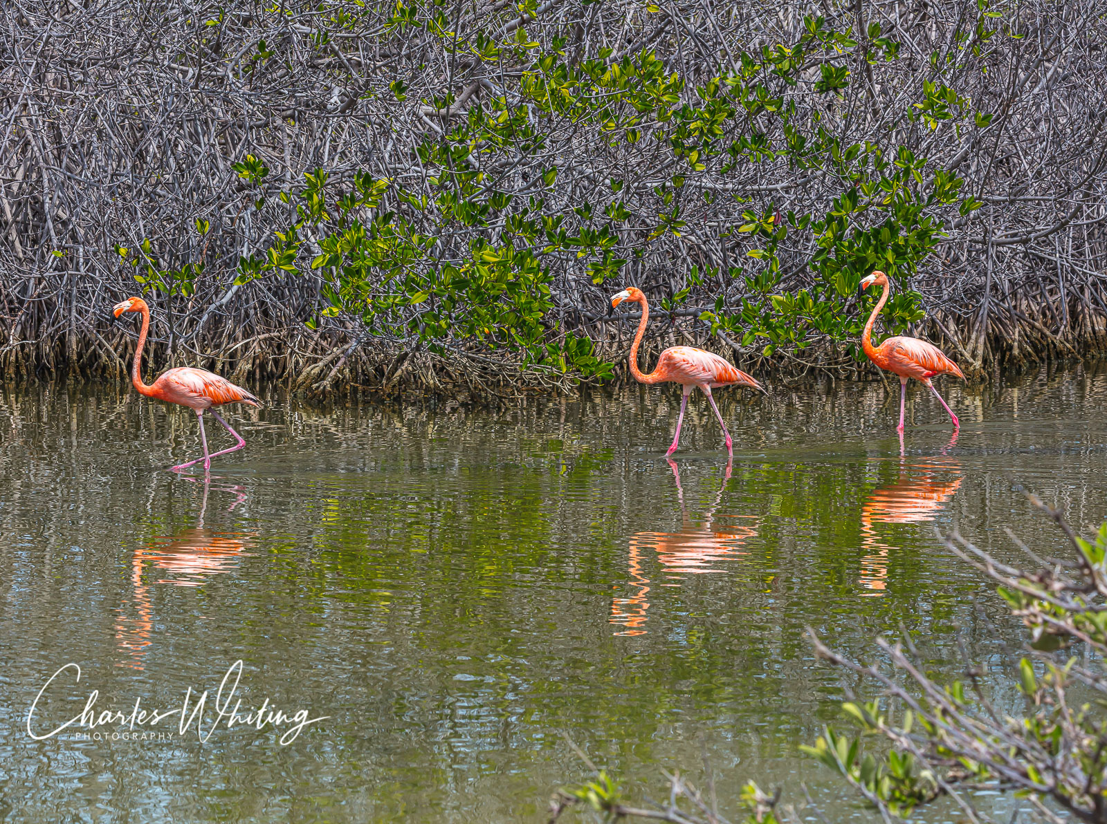 Flamingos, Bonaire, Netherlands Antilles, photo