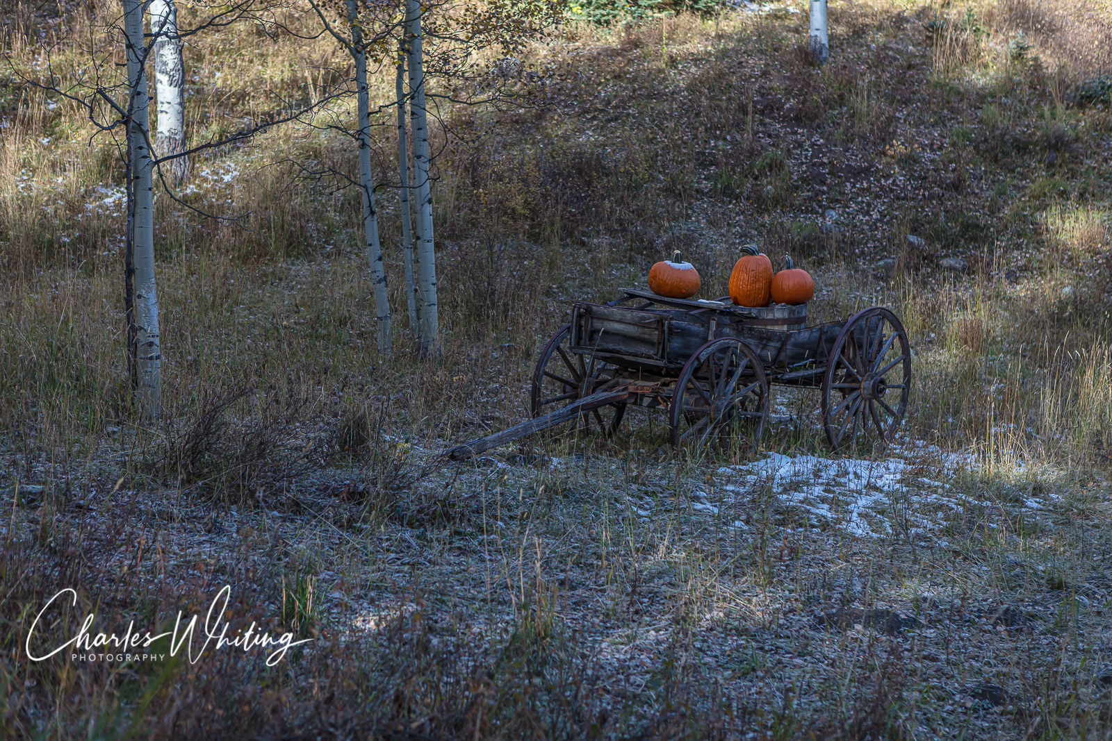 Autumn, Pumpkins, Wilson Mesa, Colorado, photo