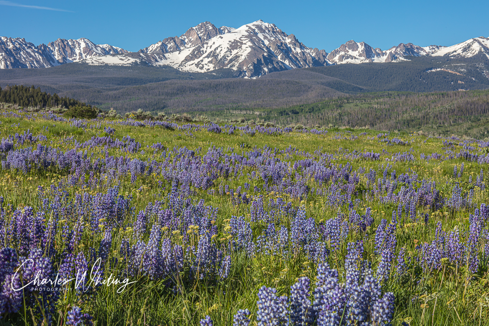 Colorado, Gore Range, Landscape, Lupines, Silky Lupines, Summit County, photo