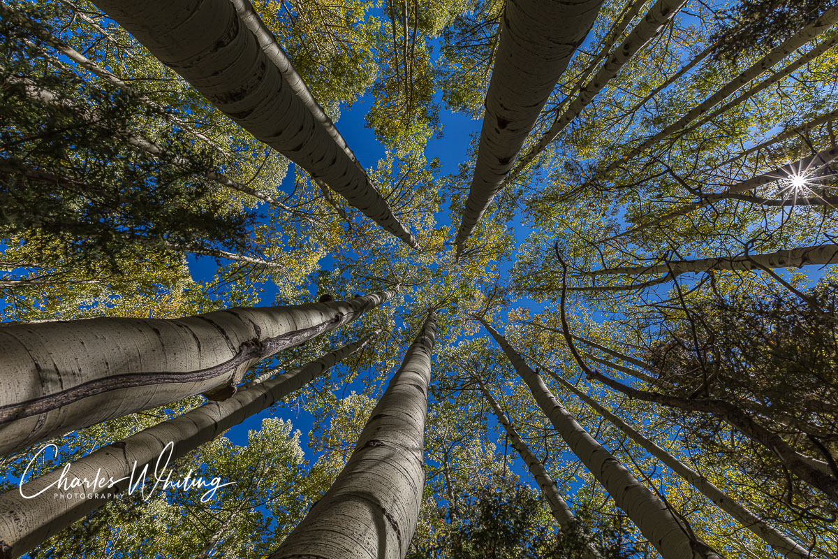 Aspen Crowns, Blue Sky and Sun Starburst from San Miguel County, Colorado