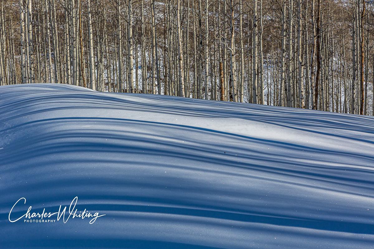 Sun, Shadows, Aspen Grove, Snow, Steamboat Springs, Colorado, photo