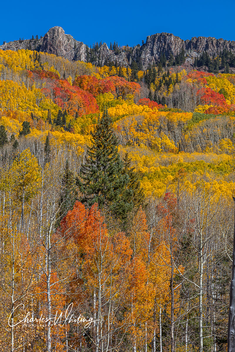 Autumn, Colorado, Kebler Pass, Gunnison County, photo