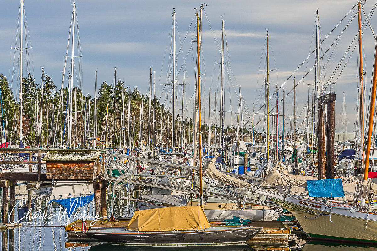 Bainbridge Island, Seattle, Washington, sailboats, masts, marina, photo