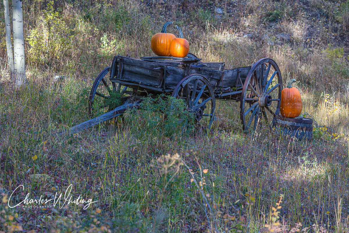 Big Bear Creek Ranch, Autumn Wagon, Placerville, Colorado, photo