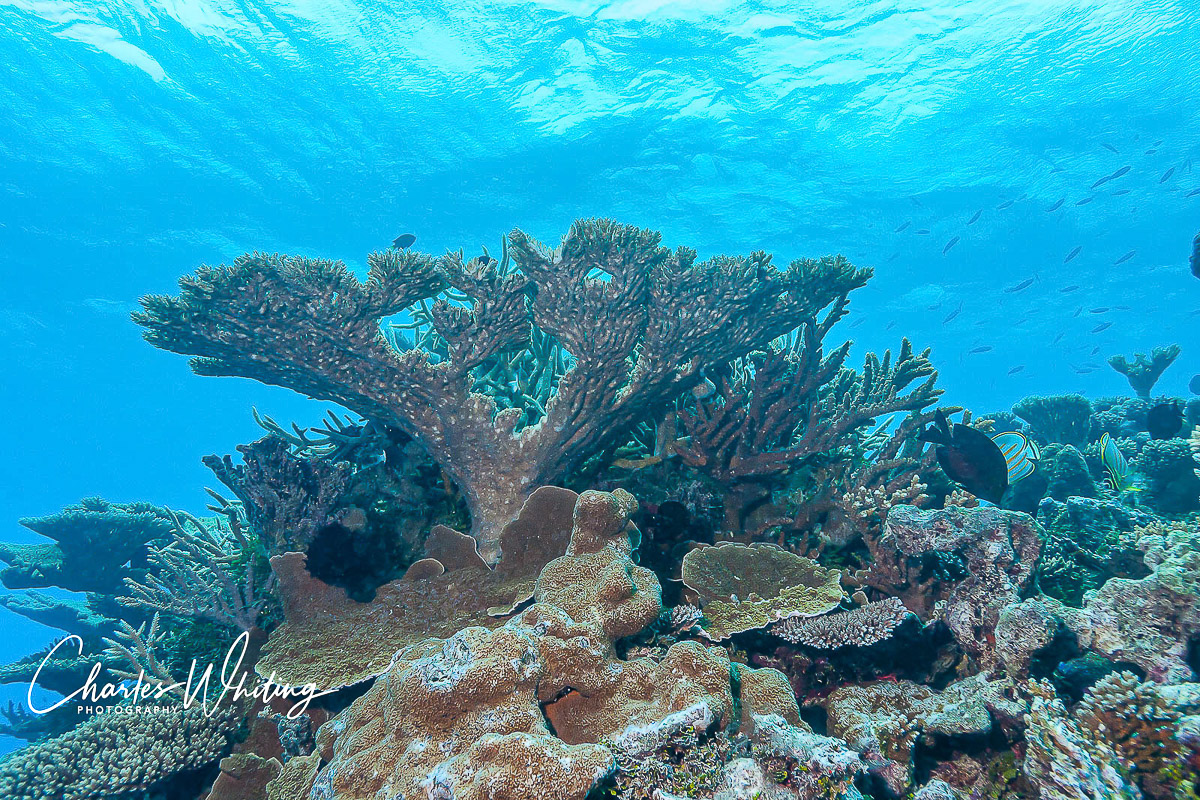 Coral, Bikini Atoll, Marshall Islands, photo