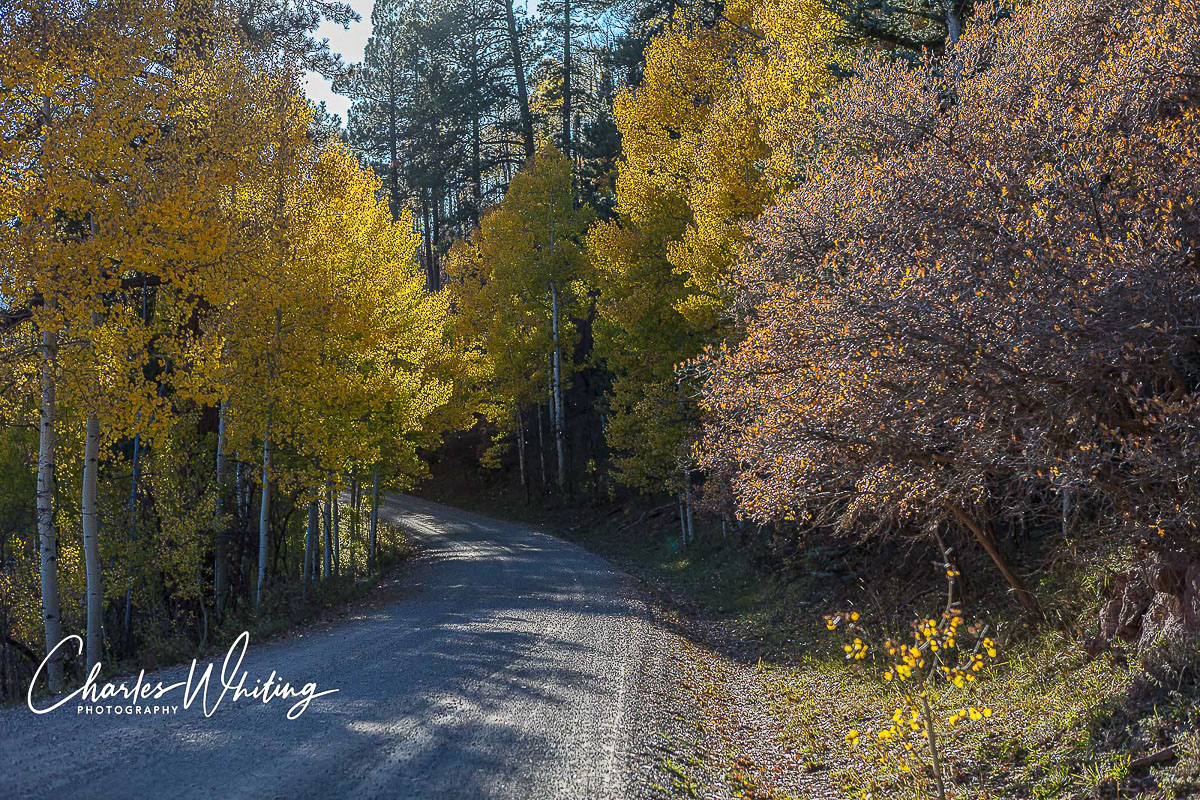 A mountain pass road lined with Aspens, Conifers, and Scrub Oak