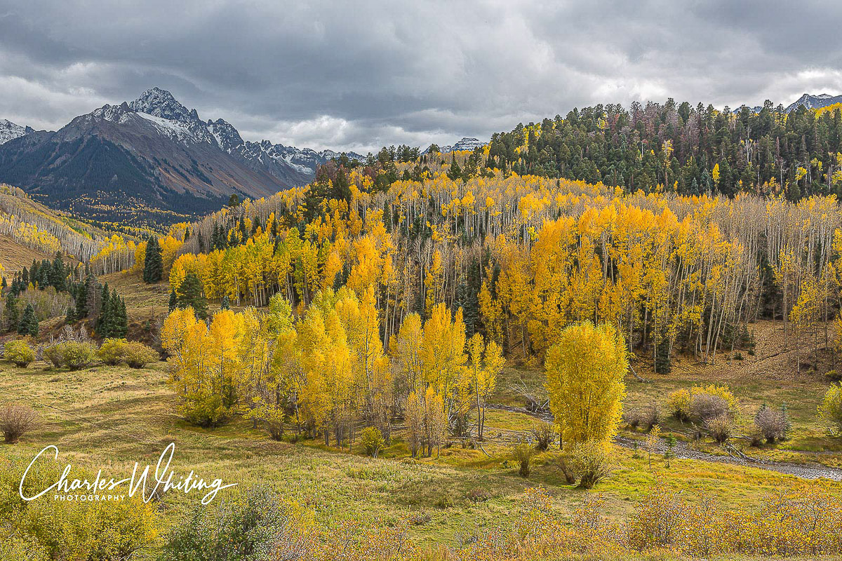 Golden Aspens, Aspens, Dallas Creek, Colorado, Sneffels Range, photo