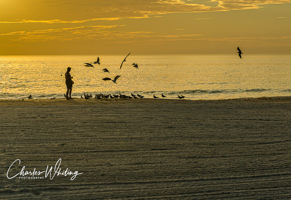 Siesta Key, Sarasota, Florida, Gulls, Twilight, Sunset, photo