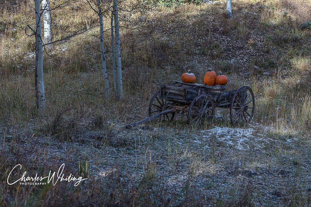 Autumn, Pumpkins, Big Bear Creek Ranch, Placerville, Colorado, photo