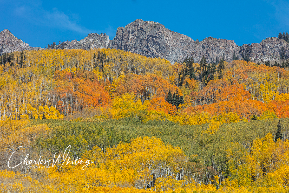 Orange, green, and yellow Aspens on the Ruby Range