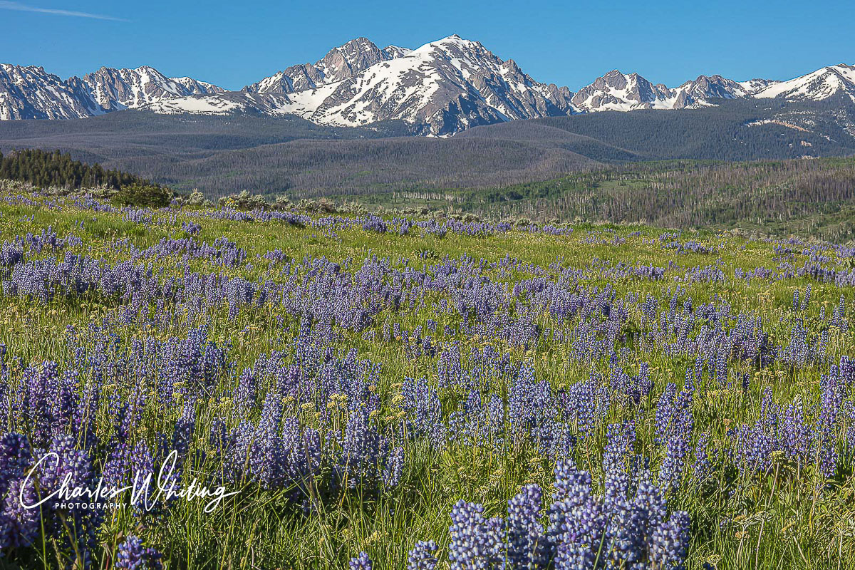 Gore Range, Purple Lupine, Summit County, Colorado, photo