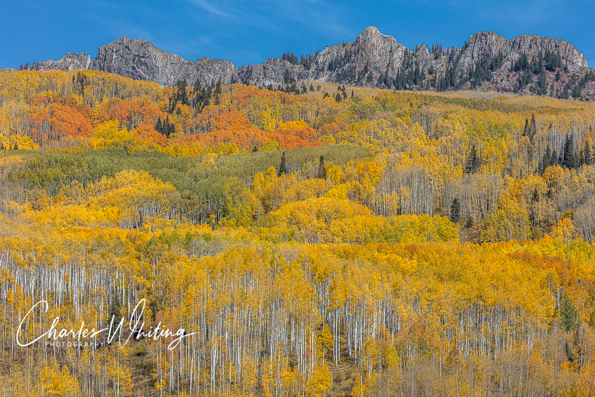 Beautiful Fall colors on the Ruby Range