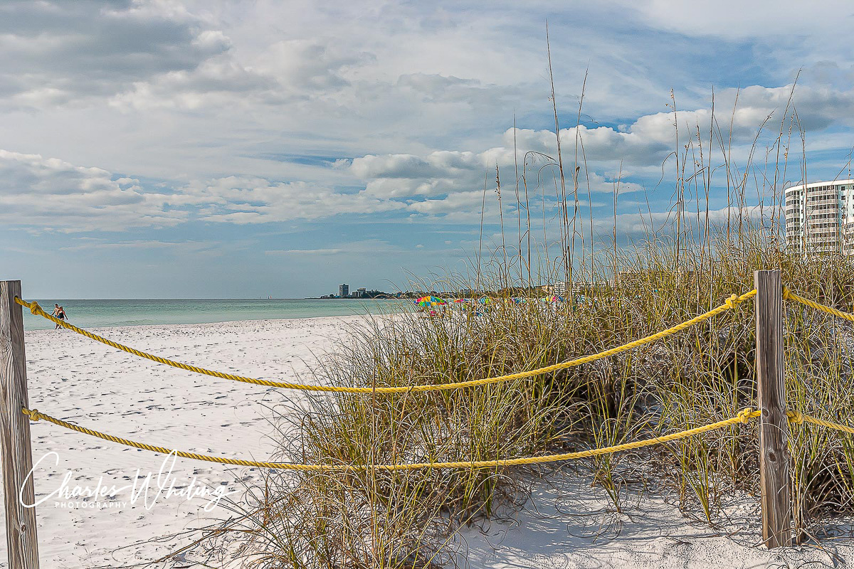 Sea Oats, white sand, Crescent Beach, Siesta Key, Sarasota, Florida, photo